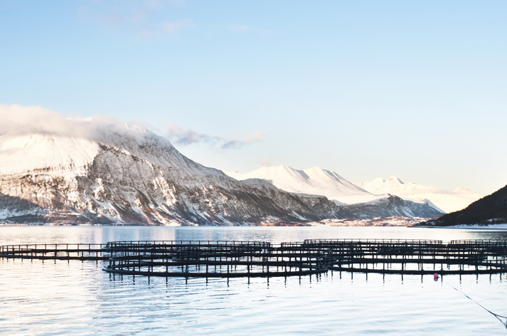 Aquaculture: The Future of Fish and Sustainable Protein