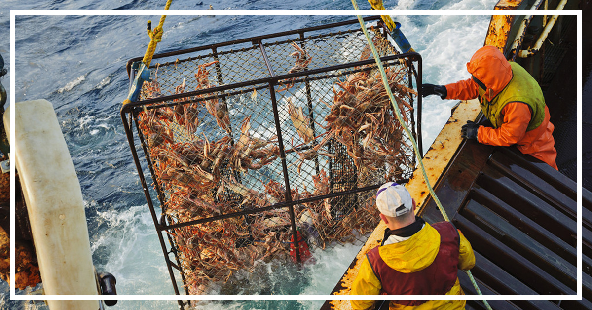 Bering Sea Opilio Commercial Fishery on the F/V Arctic Hunter, winter, Alaska.