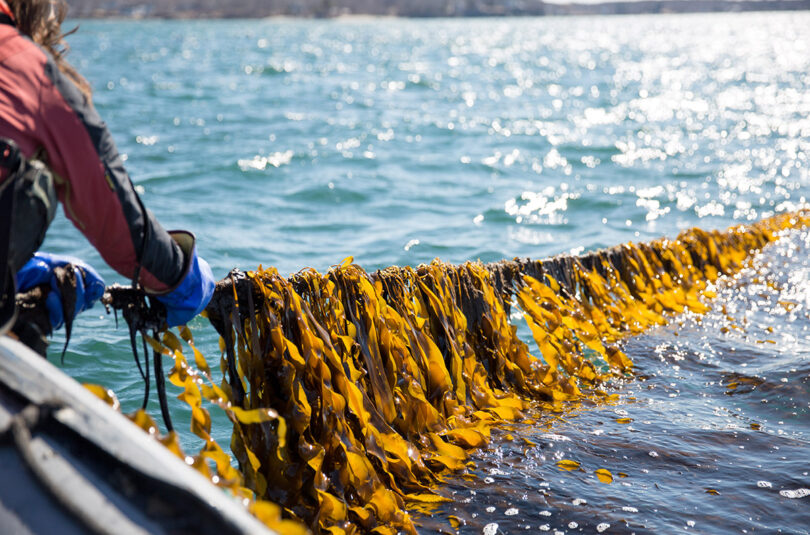 What Is Kelp and Why Should I Eat It?